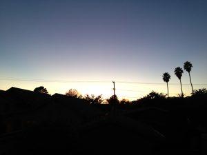 Sunset and three palms